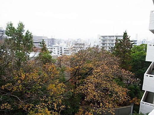 目白台アパート眺望2.jpg