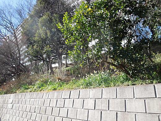相馬邸(広町)4.JPG