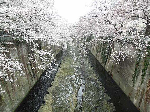 神田川(シルト層).jpg