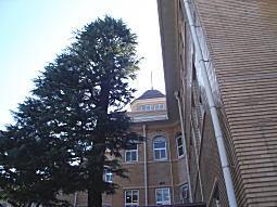 聖母病院3.JPG