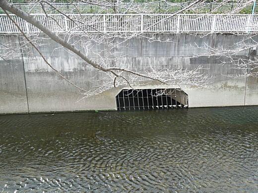 落合水再生センター排水口.JPG