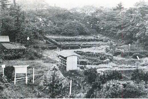落合遺跡1963.jpg