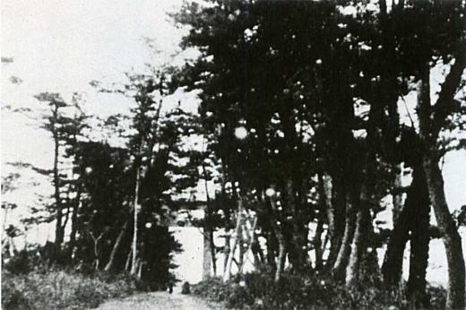 表参道一ノ鳥居1870年代.jpg