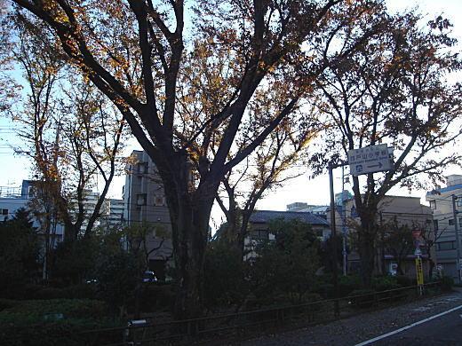 西戸山.jpg