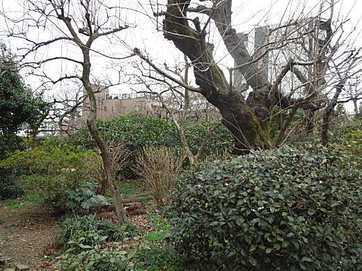 農家庭園.JPG