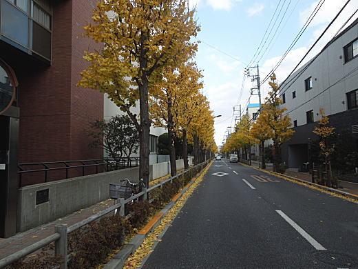 陸軍科学研究所百人町通り.JPG