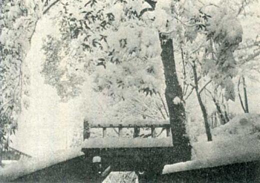 駒留橋と金川.jpg